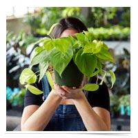 Woman behind a plant.